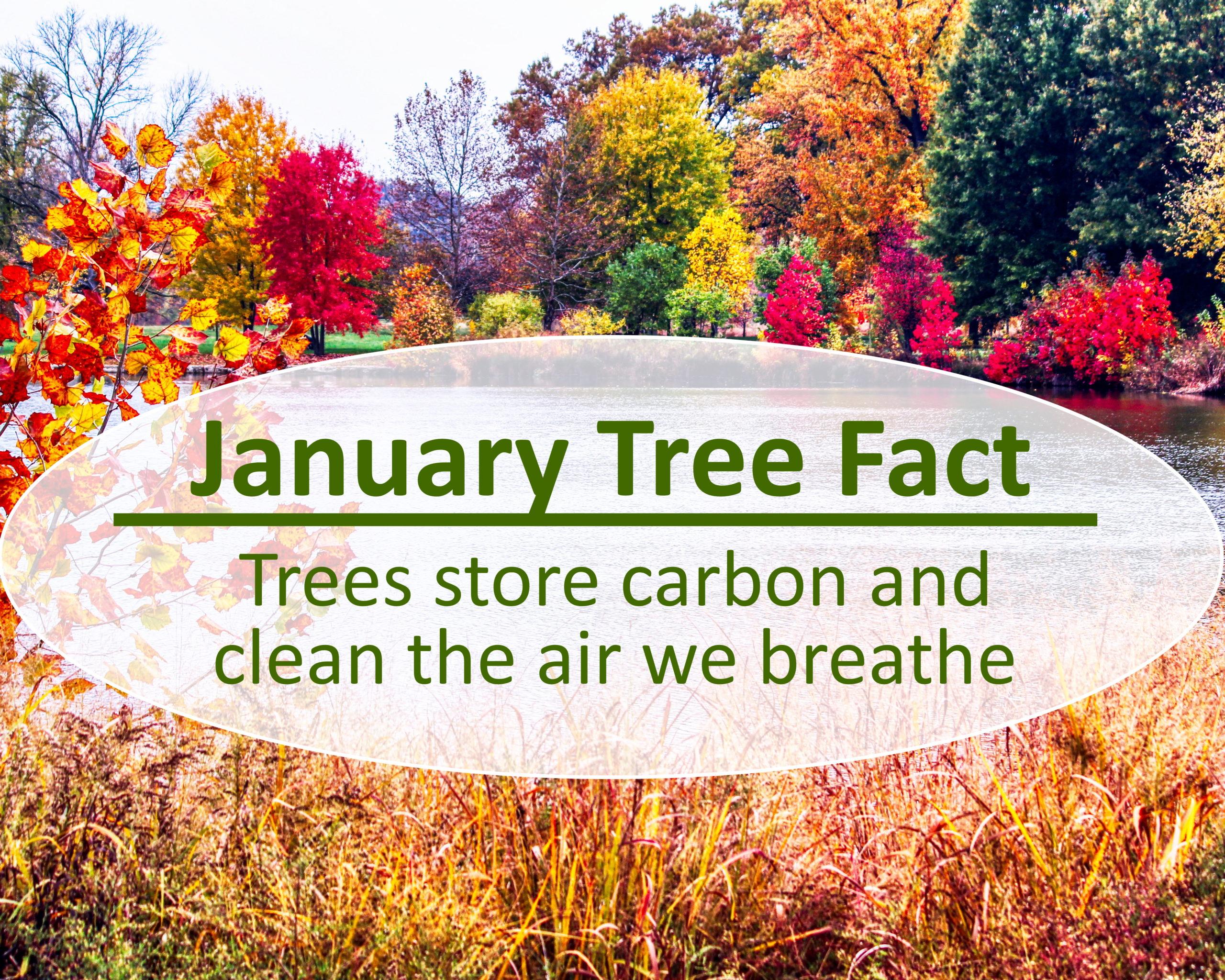 tree-fact-january