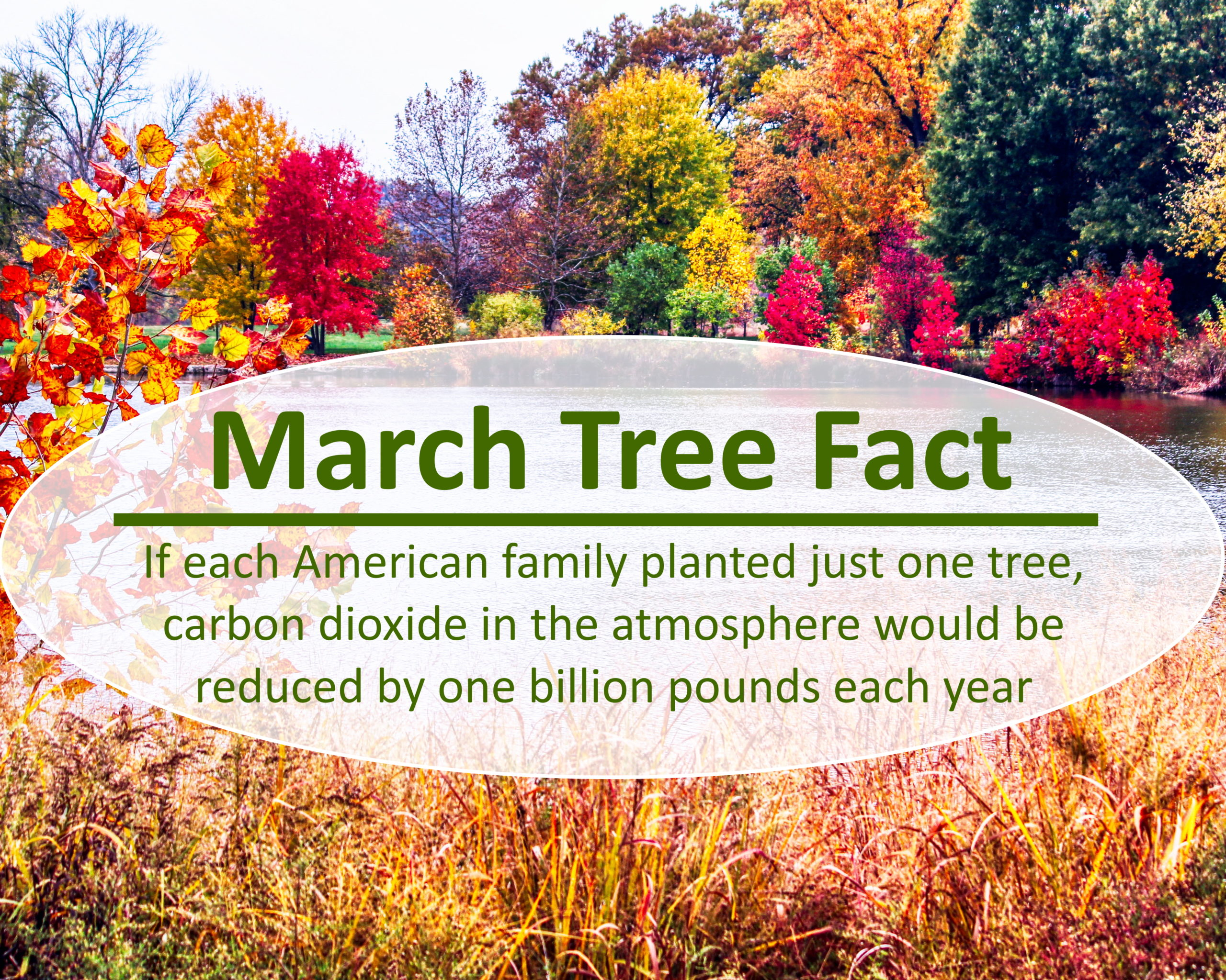 tree-fact-march